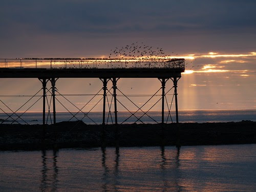 12076 - Starlings over Aberystwyth Pier