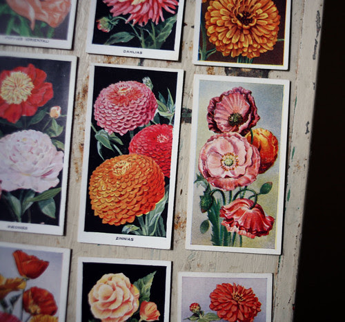 Flower cigarette cards