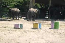 Sejarah Berdirinya Gembira Loka Zoo Yogyakarta