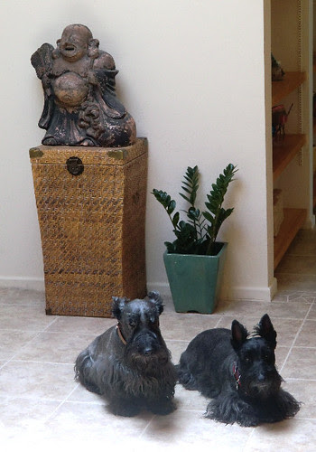 two little square black dogs.... by angryparsnip