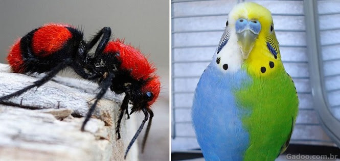 Animais coloridos para alegrar seu dia