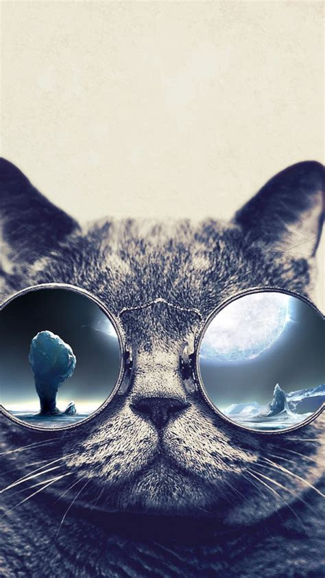 cool cat wallpapers  images