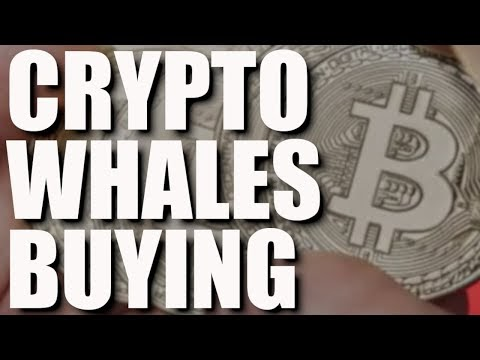 Can Bitcoin Recover?, Binance Whales, 1$ Billion Fund, Coinbase NFT, No Crypto Ban & Well Duhh   Blockchained.news Crypto News LIVE Media