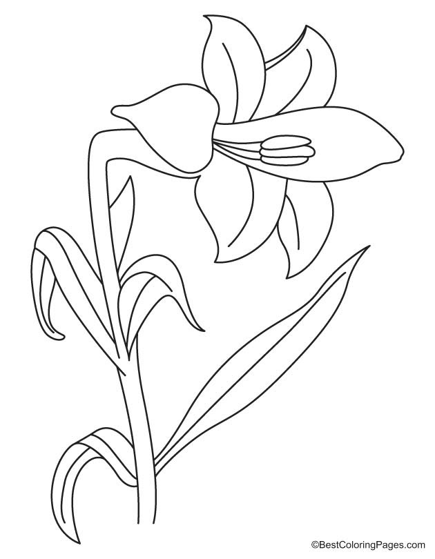 Lily Flower Coloring Page Download Free Lily Flower Coloring Page For Kids Best Coloring Pages