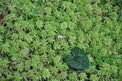 彷彿地毯般的苔蘚