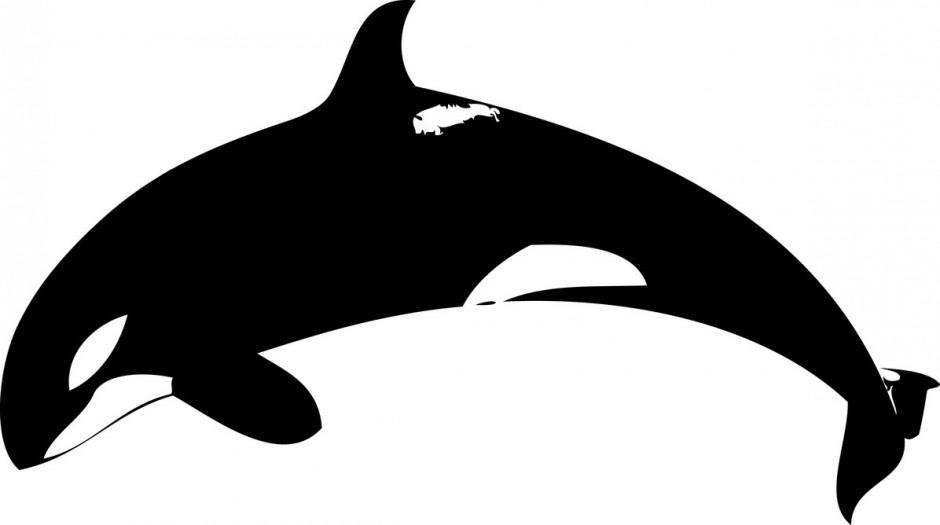Baby Killer Whale Coloring Pages Sentirelbluesinbcncity