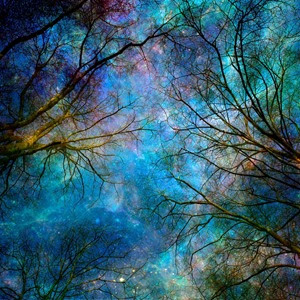 _Winter trees. Reaching for the stars. Source Internet