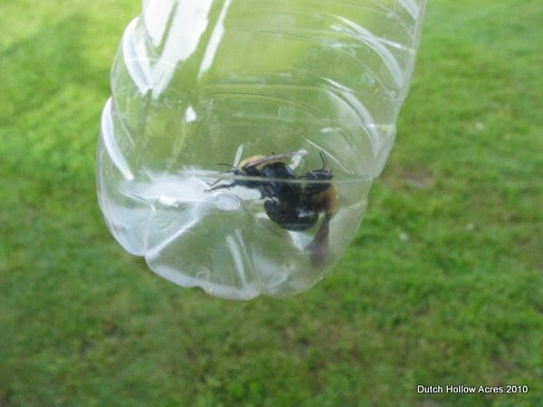 how to build a wood bee trap