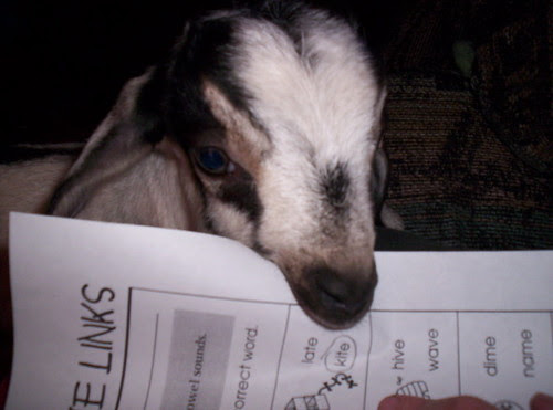 The Goat ate my homework
