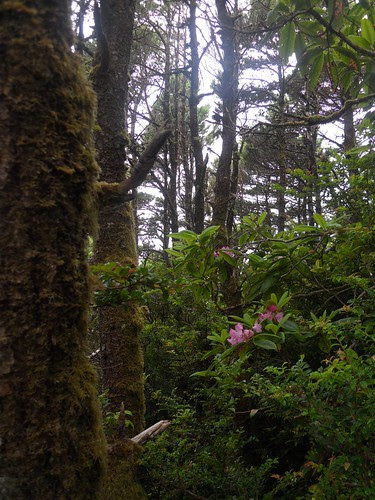 hobbit trails 068