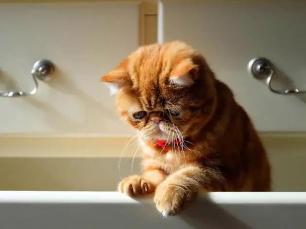 gato-triste-