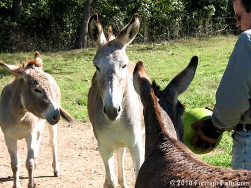 Donkey Ball 5