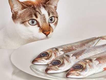 Kisah Kucing Makan Ikan