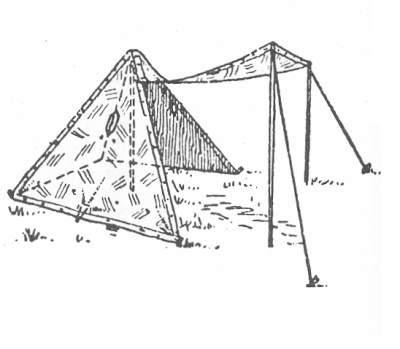 posterior