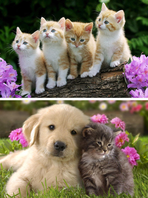 App Shopper Cats Dogs Wallpapers Hd Cute Puppies Kittens