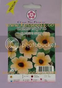 เมล็ดพันธุ์ดอกแบล็คอายซูซาน