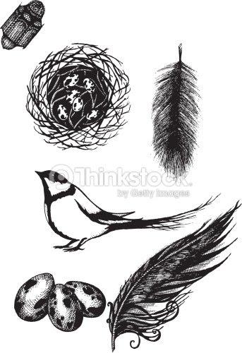 巣小さな鳥の羽ベクトルイラスト ベクトルアート Thinkstock
