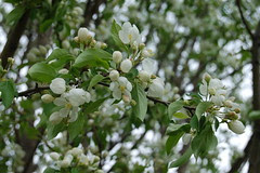 Trees are blossoming!