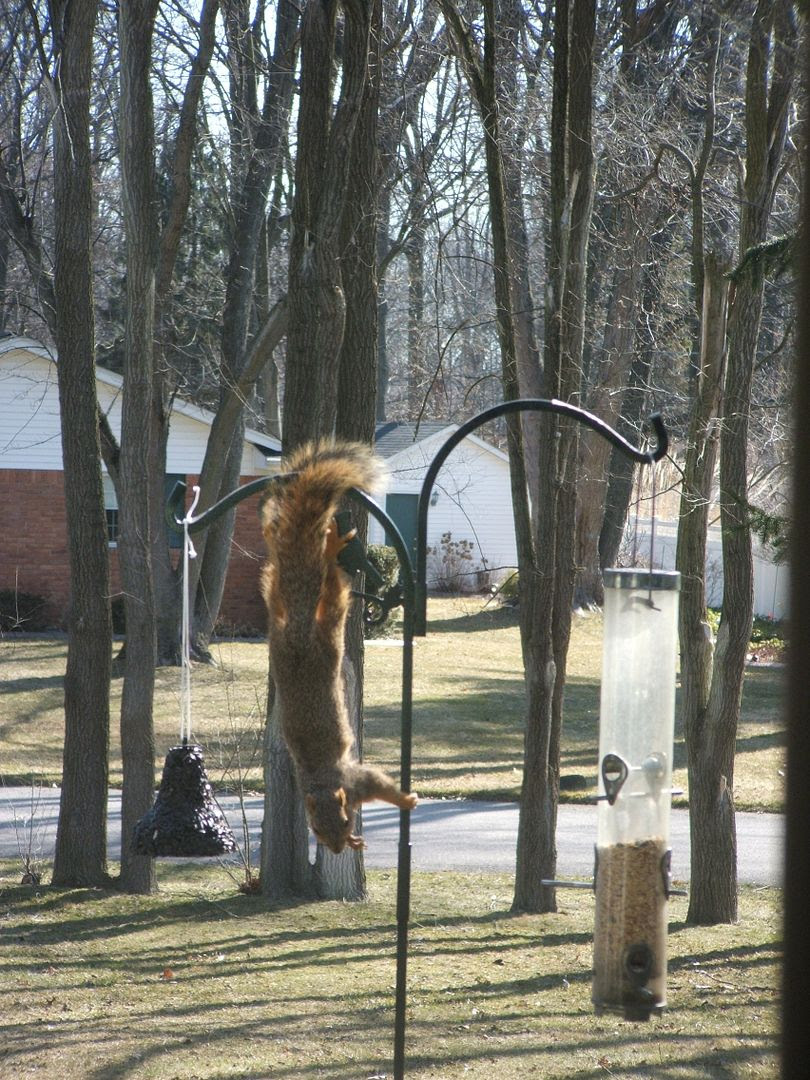 Squirrel by Angie Ouellette-Tower for godsgrowinggarden.com photo 004_zps4f1167d4.jpg