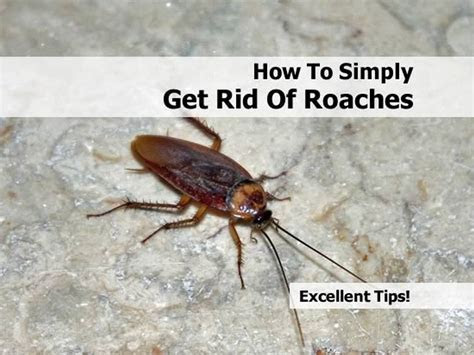 Red spider mites on houseplants, roaches in house how to get rid of