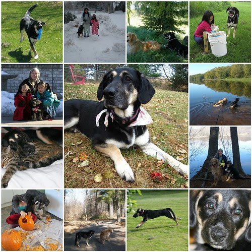 In Memory of Gretel - January 23, 2008-January 12, 2013