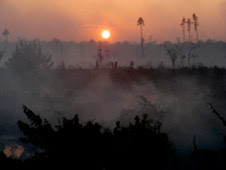 Wildfire in Dismal Swamp