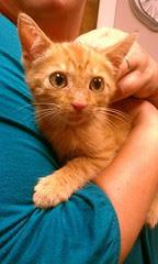 Tiff's new kitten Rocky