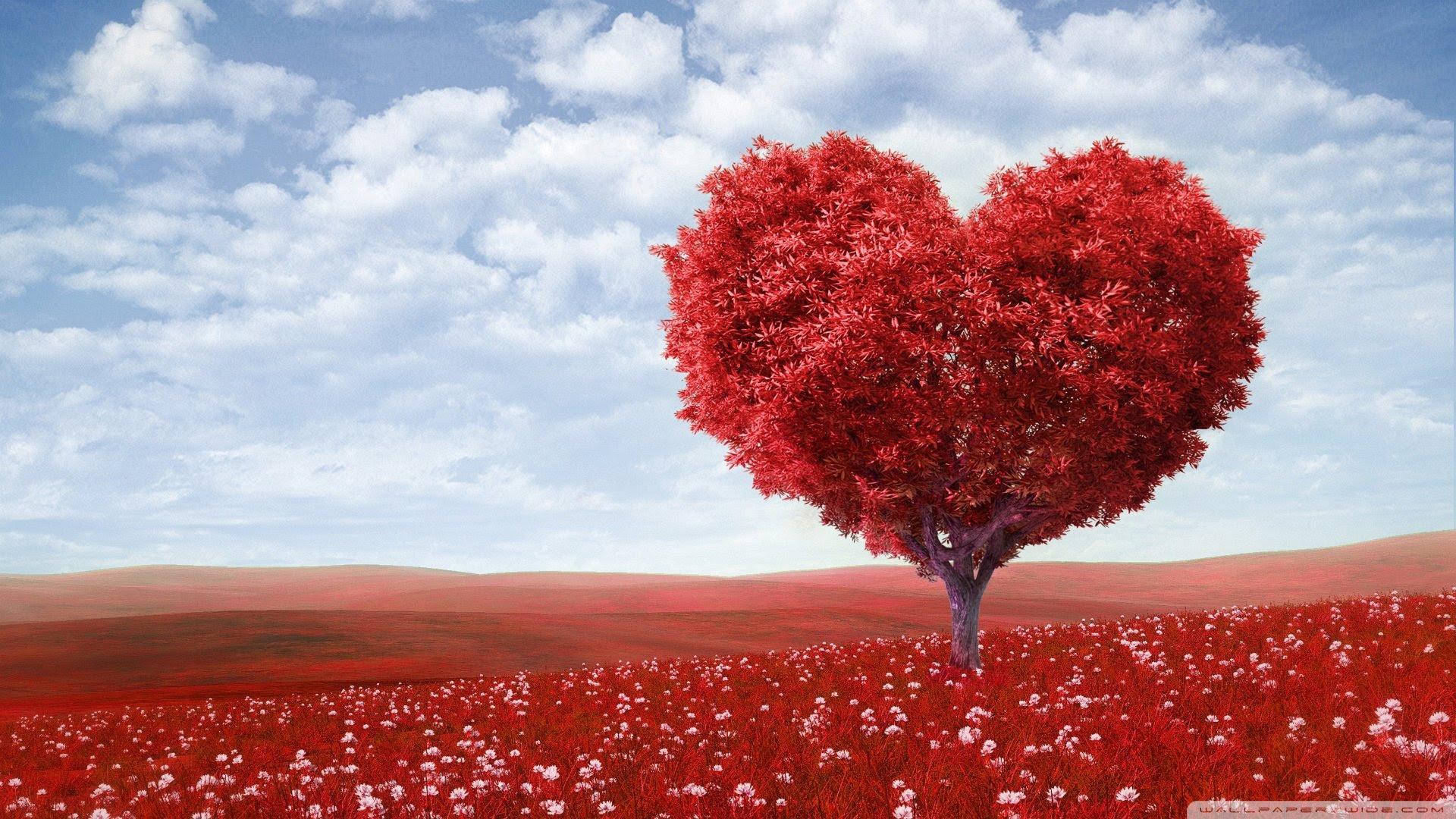 Beautifull of the Love Tree Hd Wallpaper [1920x1080]