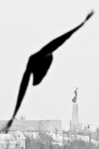 Szabadság/Freedom