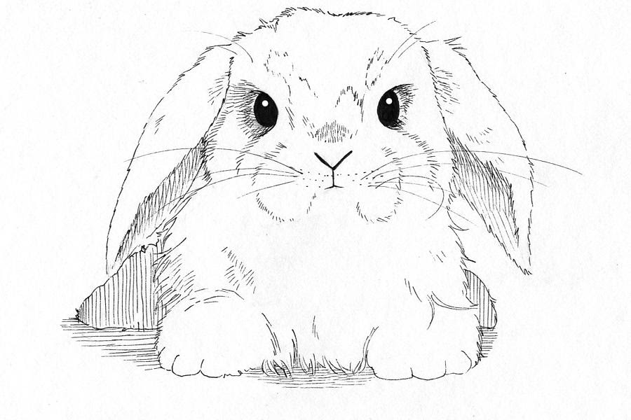 drawn bunnies on Pinterest | Rabbit, Bunny Drawing and Bunnies