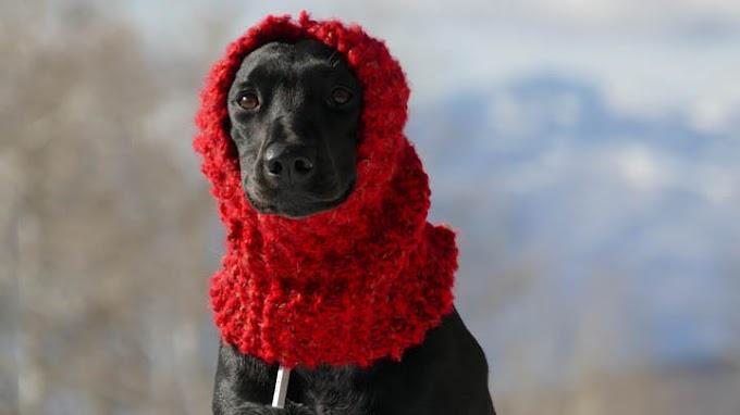 Cómo saber si el perro tiene frío