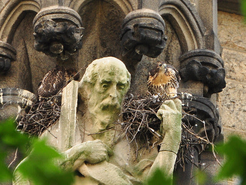 St. Andrew & Red-Tail Nestlings
