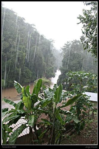 El monzón desde la selva tailandesa  / Monsoon rain from thaylandese jungle