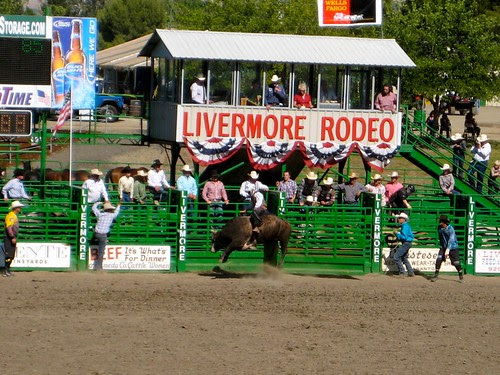 Bull Riding at the Livermore Rodeo