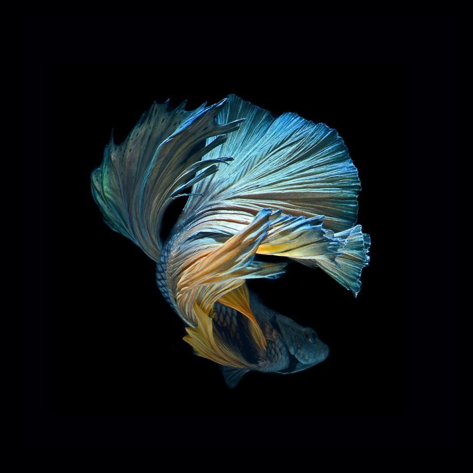 Kumpulan Wallpaper Hd Iphone Fish