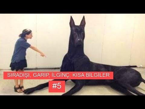 Sıradışı, Garip, İlginç, Kısa Bilgiler ve Enteresan Olaylar #5 (VİDEO)