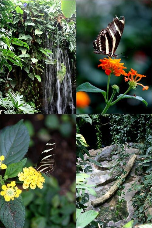 farfalle e coccodrilli