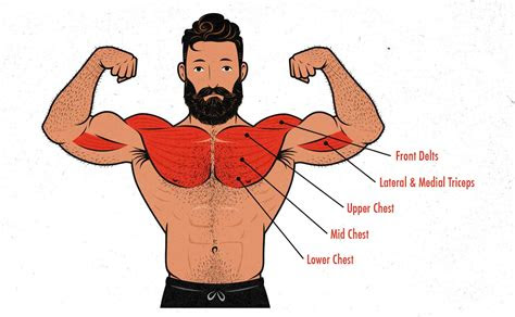 bench press hypertrophy guide outlift