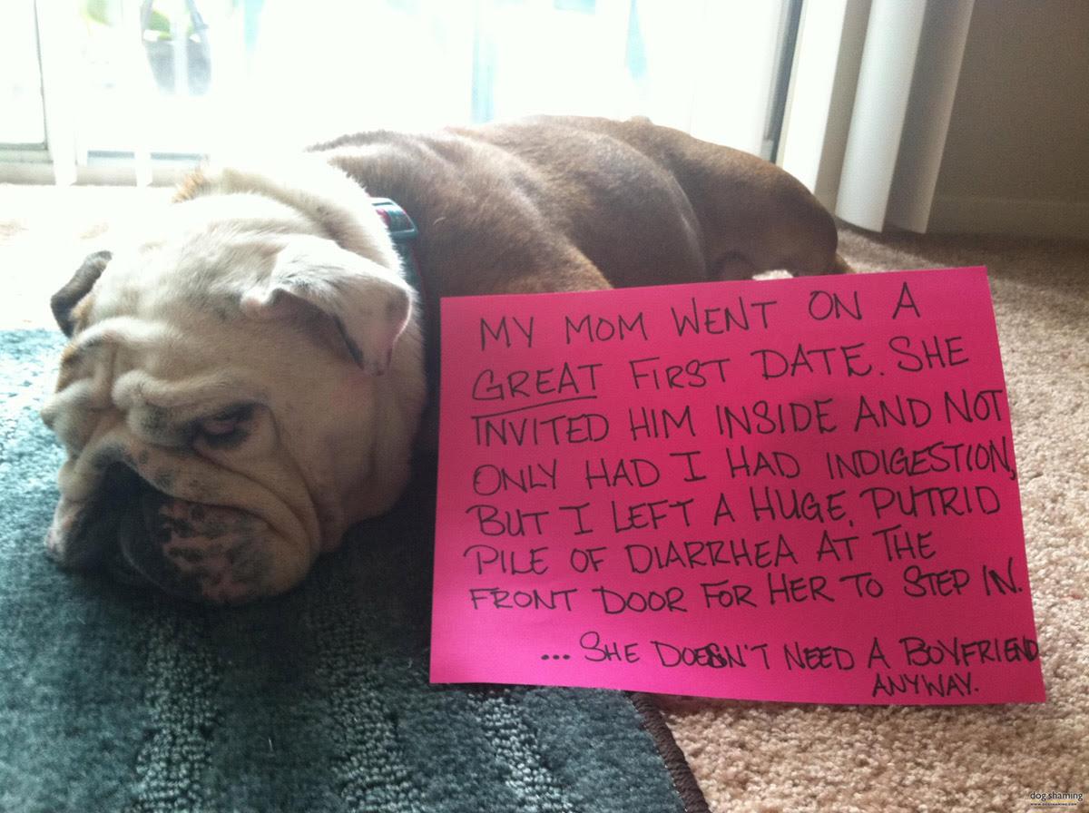 dog shaming 18 32 Hillarious Public Shaming of Dogs