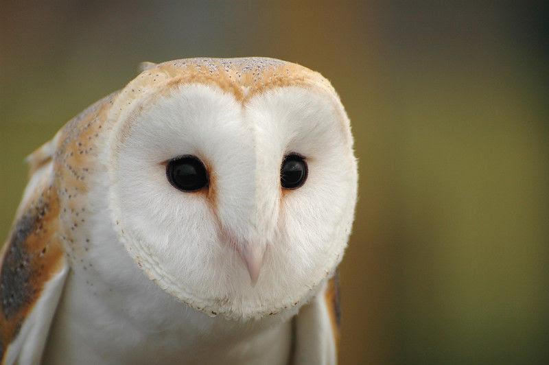 Download 67+ Foto Gambar Burung Hantu Bergerak  Paling Unik Free
