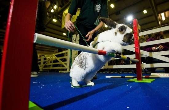 Ολυμπιακοί αγώνες για κουνέλια (23)