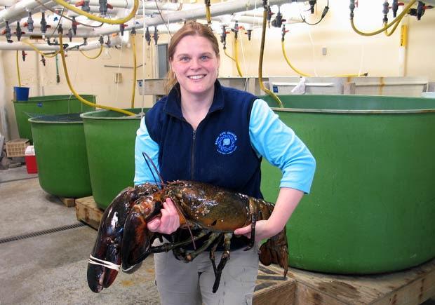 Aimee Hayden-Rodriques, do aquário do estado americano do Maine, posa com lagosta de 12,2 quilos e 1 metro de comprimento. Ela foi pescada por Robert Malone, próximo à cidade de Rockland, em 17 de fevereiro. O crustáceo foi apelidado de Rocky (Foto: Maine State Aquarium/AP)