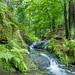 Silberbachtal # 9 - Wasserfall, Klippen und Farn - Waterfall, cliffs and fern
