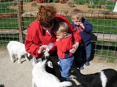 Feeding the Goats - Our first trip to Deanna Rose (5)