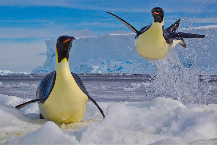Ледяная красота Пола Никлена