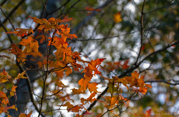 autumn leaves, a bit of rust