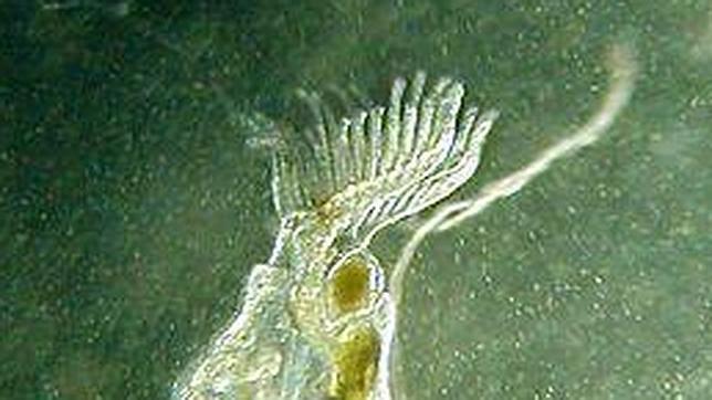 Descubren que un antepasado de los humanos tuvo tentáculos hace millones de años