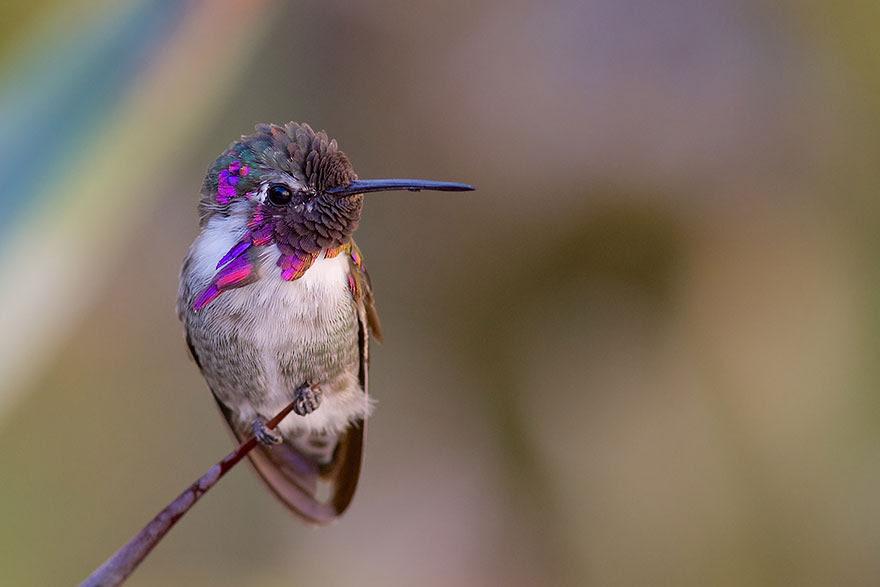 cute-beautiful-hummingbird-photography-6