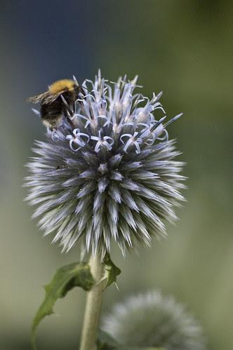 mesiohakas ja mesimumm