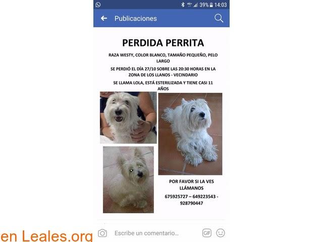 Perros ya encontrados » España » Las Palmas - Gran Canaria » YA ESTA EN CASA